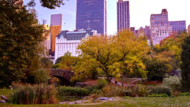 New York City, skyline from Central Park video