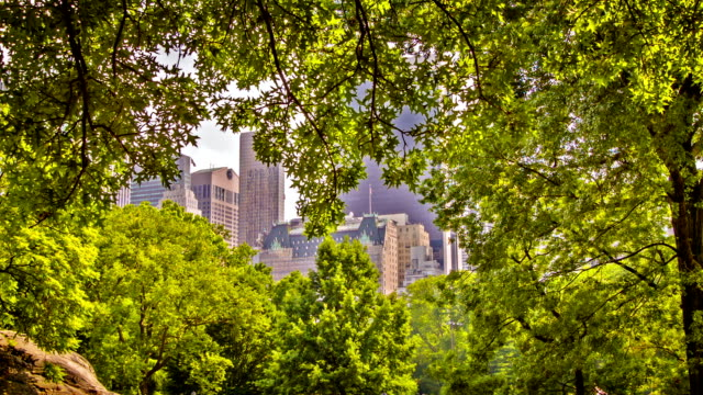 New York in tree frame video