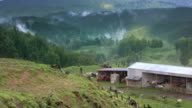 New Zealand farm landscape, with misty hills, loopable video