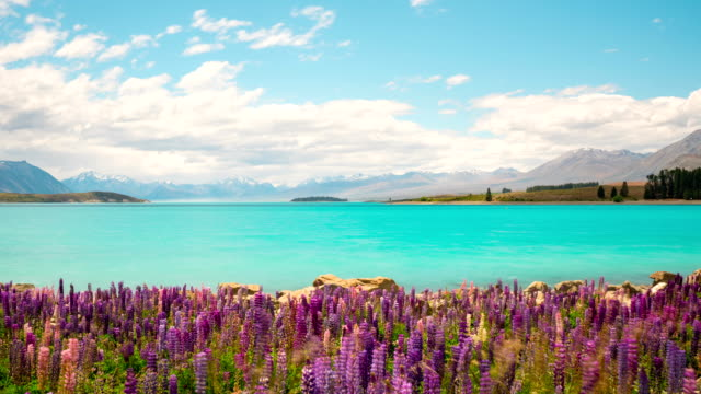 New Zealand Flowers Landscape Time Lapse video