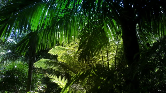 New Zealand tropical forest - HD720 video