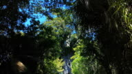 New Zealand's largest tree: Tane Mahuta, famous giant Kauri video
