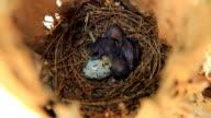 Newborn birds. video