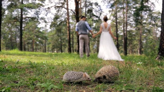 Newlyweds walk on wood holding hands near sweet hedgehogs video