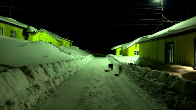 night festivities stray dogs black and white color cleared snow from the street between the houses with yellow shift camp video