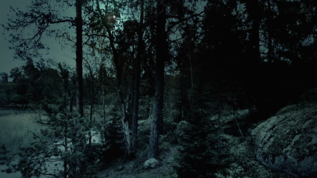 Night forest video