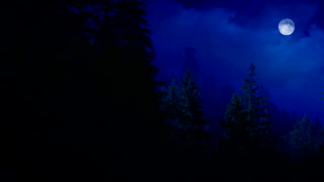 Night Forest With Moon video