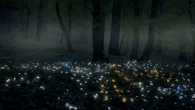Night magic forest with saturated anemones. Colorful phosphoresce flower. video