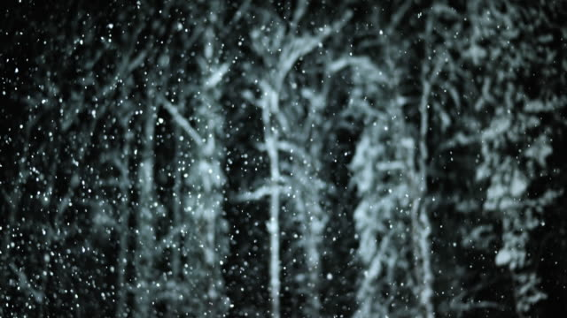 SLO MO Night portrait of trees during snowfall video