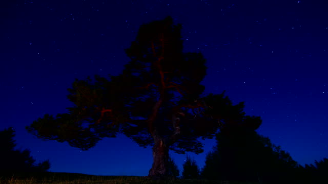 Night Stars Time Lapse Sky Turning Space, forest trees foreground Astrophotography video