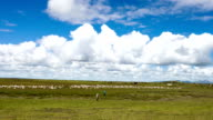 nomads and sheeps on meadow and skyline,timelapse. video