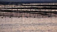nori cultured in the sea in Xiapu city, Fujian Province video