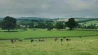 Northumberland Rural Landscape video