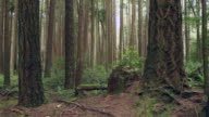 Northwest Forest dolly shot video