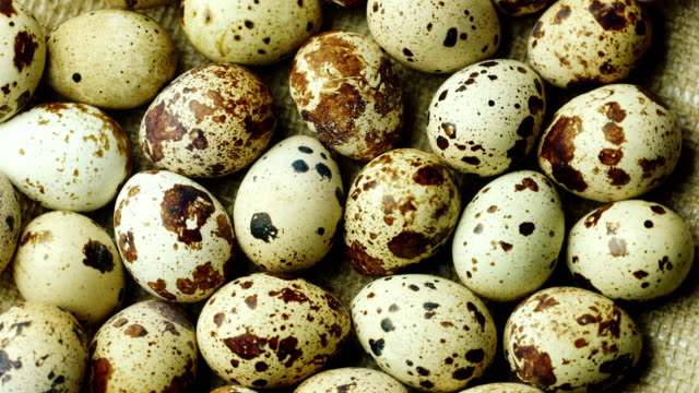 Not boiled quail eggs. Dietary food video
