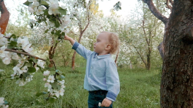Now he knows how blooming apple-tree smells video