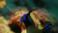 Nudibranch undersea video