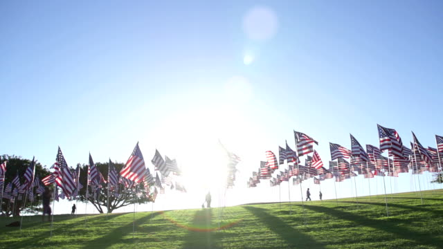 Numerous american flags waving in the wind video