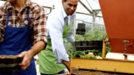 Nursery employees run planters through plant potting machine video