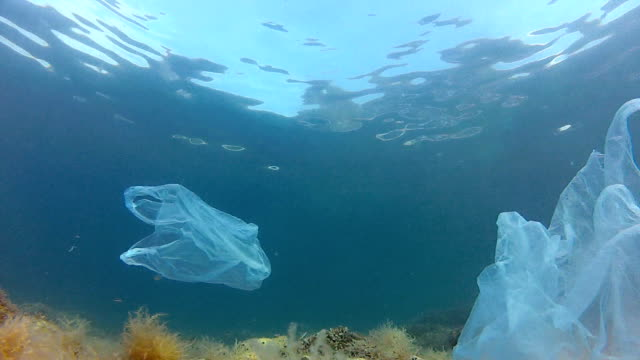 Nylon bags and fishes video