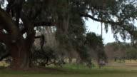 Oak Tree Closeup video
