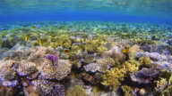 Ocean life on Coral reef with lot of tropical Fish / Red Sea video