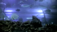 Oceanarium underwater behind the glass video