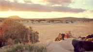 Off road vehicles driving in dry river bed at sunrise video