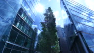 Office building with green tree in foreground (Berlin) video