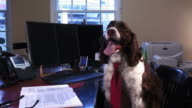 Office Dog video
