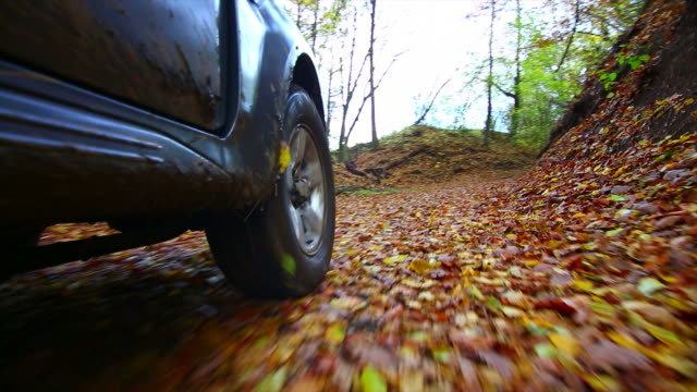 POV Off-road Vehicle Driving Through Autumn Forest video
