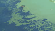 Oil Pollution video
