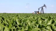 Oil Pump Jack in a Corn Field video