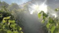 Okanagan Irrigation 4K UHD video
