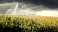 Okanagan Valley Corn Field Irrigation video