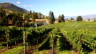 Okanagan Valley Organic Pinot Noir Vineyard Irrigation video