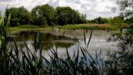 Old abandoned pond video