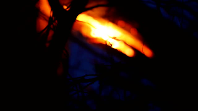 Old dry trees are burning in the forest at night video
