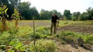 Old farmer mows the grass in his garden. video