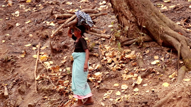 Old Indian woman carrying firewood on her head. video