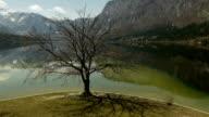 Old Leafless oak tree at mountain lake video