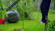Old man electro mower cuts the grass among the ornamental shrubs video