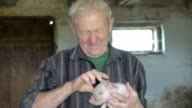 Old man holds pig on hands and playing with him in FullHD video