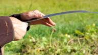 Old man sharpening his scythe. video