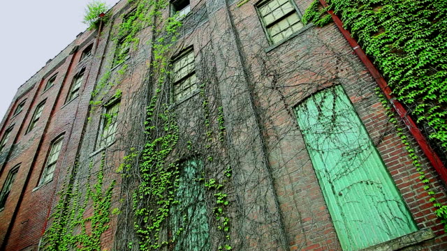 Old run down building with crawling plants video