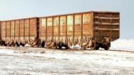 Nizhniy Baskunchak, Russian Federation - August 16, 2015: Old rusty train wagons with stalactites of salt at the lake Baskunchak video