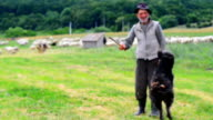 Old Sheperd near his flock video