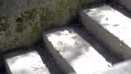 Old stone steps sunny. In the park. video