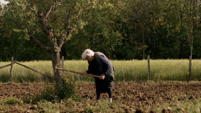 Old Woman Working in the Fields video