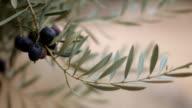 Olive Branch With Black Olives video
